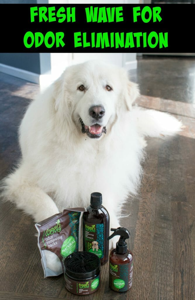 Tired of just masking odor with candles or scented sprays? Fresh Wave removes odor molecules to truly leave you with a fresh smelling home. Here's why Fresh Wave is this Pacific Northwest home's favorite for eliminating wet Great Pyrenees smell!