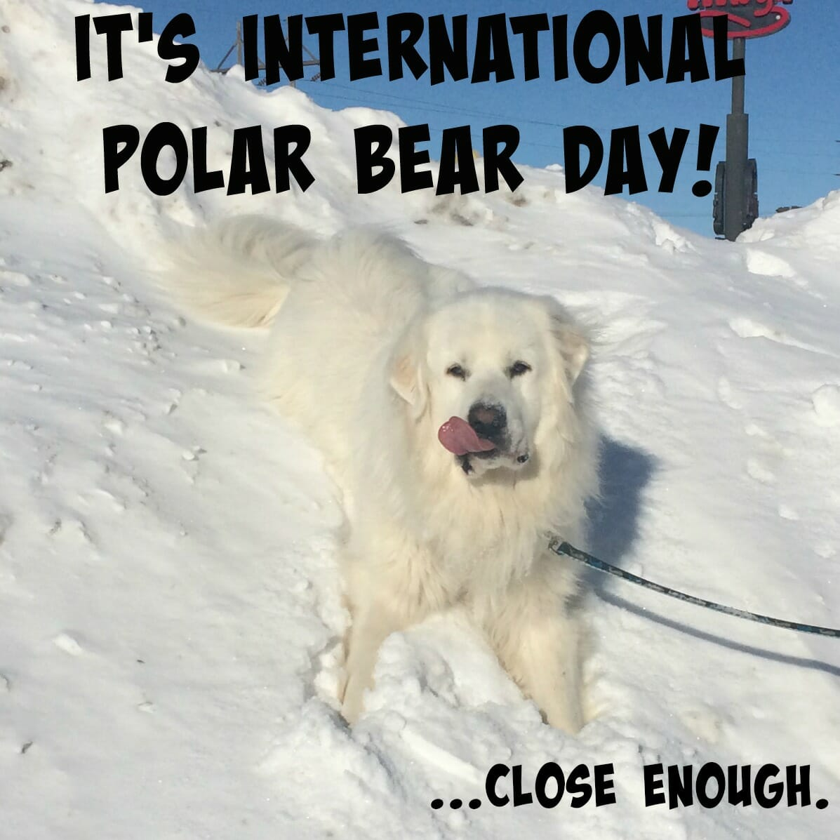 It's International What Day?