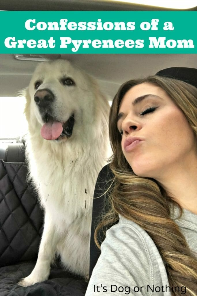 From pulling white dog fur out of a wine glass to accepting fur as an accessory, I have many confessions as a Great Pyrenees mom. Click through to read them and please tell me you can relate!