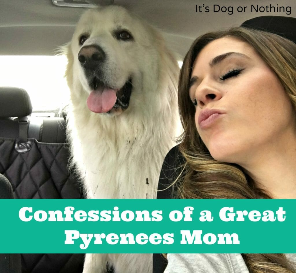 From pulling white dog fur out of a wine glass to accepting it as an accessory, here are some of my confessions as a Great Pyrenees mom. Please tell me you can relate!