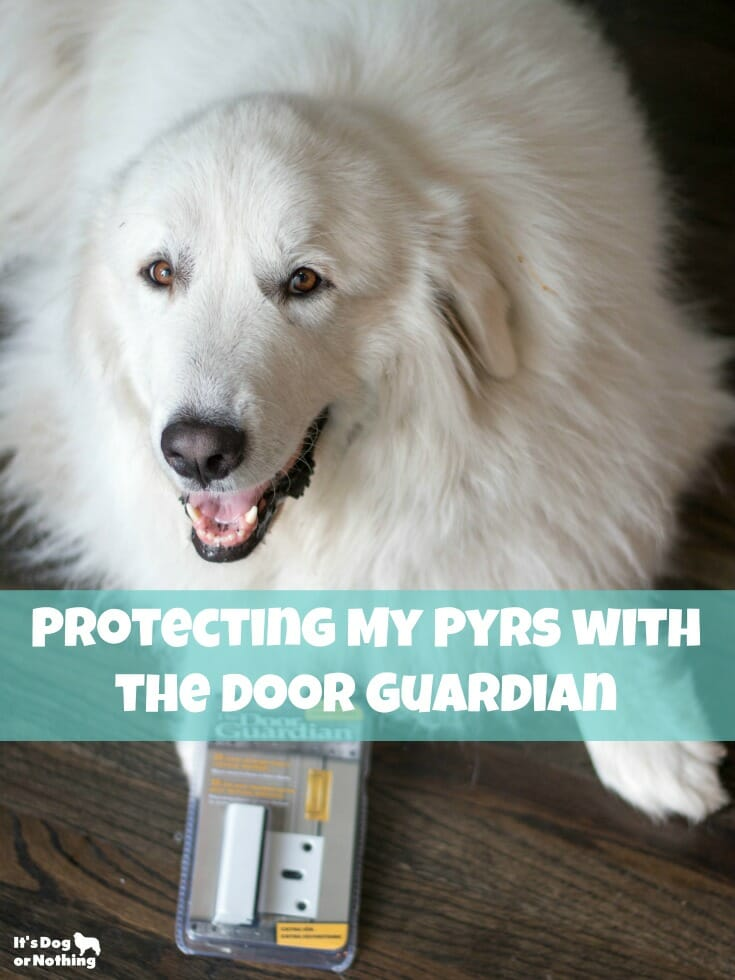 If you have Great Pyrenees, you know they are escape artists! If your dog is known for sneaking out your door, The Door Guardian is for you!