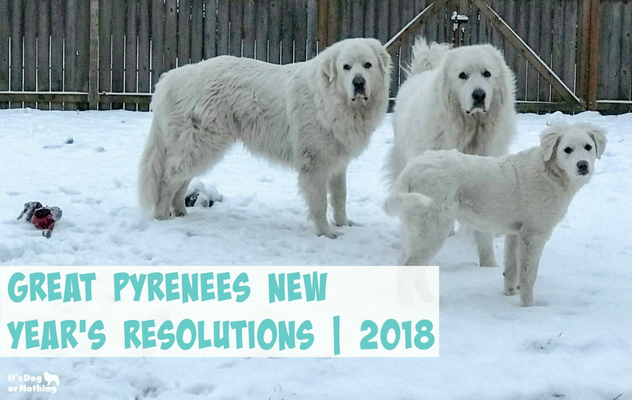 Great Pyrenees New Year's Resolutions 2018