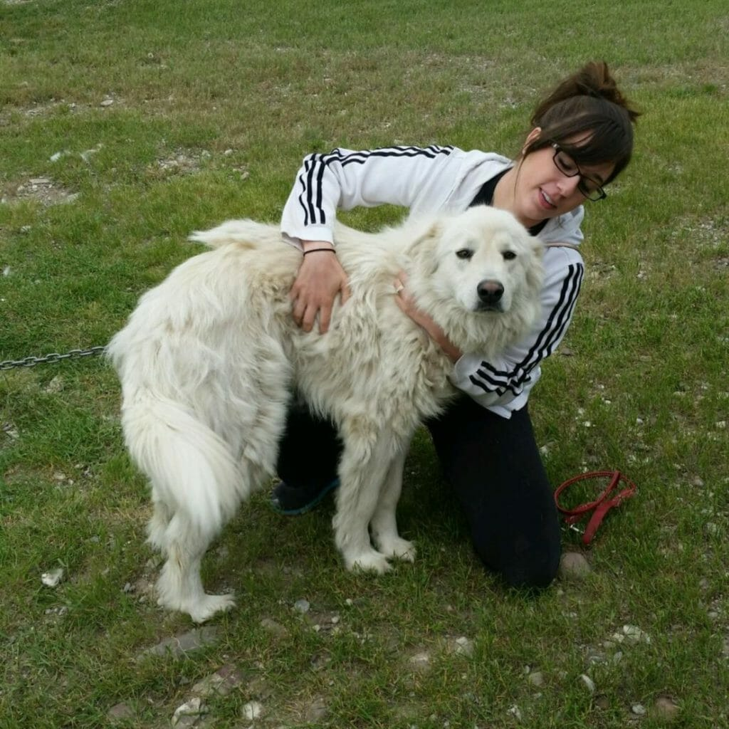 Bella   Great Pyrenees Rescue  It's Dog or Nothing