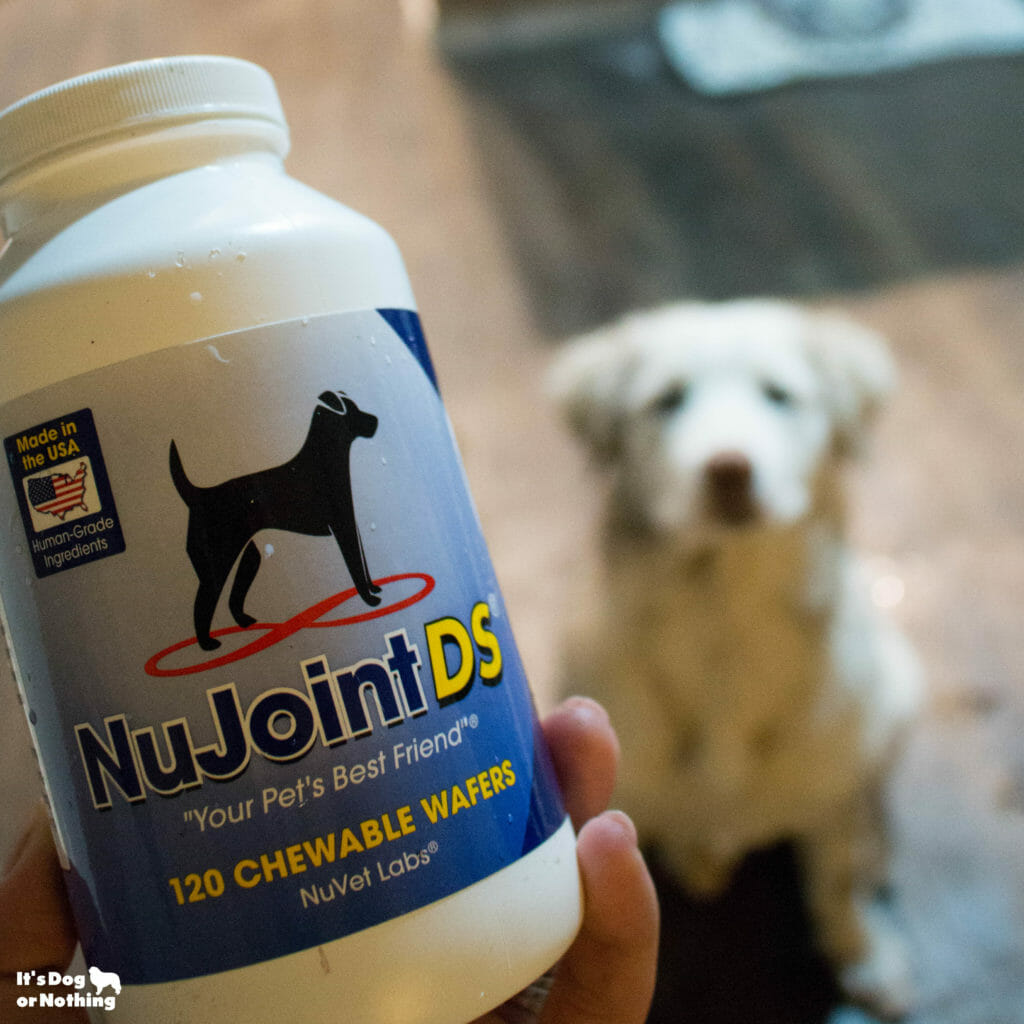 Giant breed puppy growth can be tricky, but it doesn't have to be. Here are 5 tips for healthy joints and our favorite joint supplement, NuVet's NuJoint DS