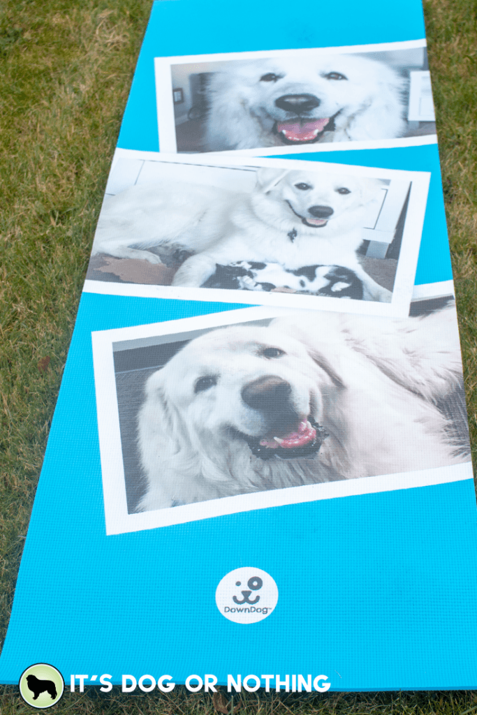 Do you wish you could keep your pet with you during your favorite yoga class? Turns out, you can!