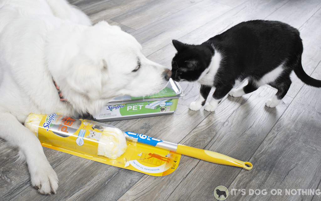 3 Great Pyrenees + 1 cat + PNW weather = disaster. Here's how we stop the shedding from spreading and keep the house (somewhat) presentable.