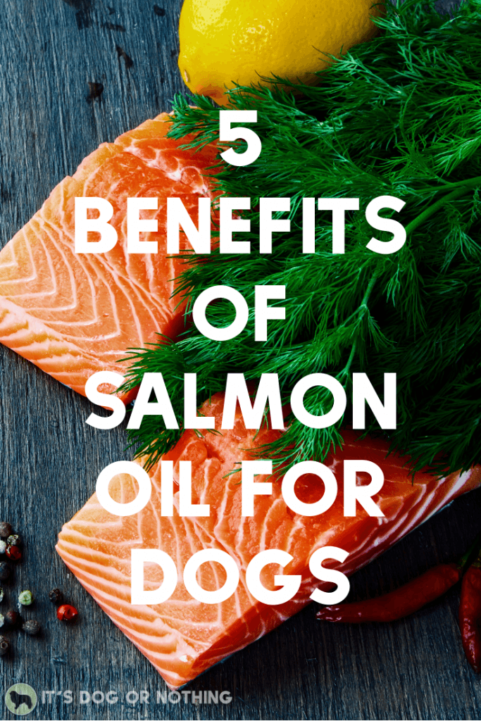 Every dog can benefit from salmon oil. We talk benefits, choosing salmon oil over fish oil, and our favorite salmon oil product, Kronch.
