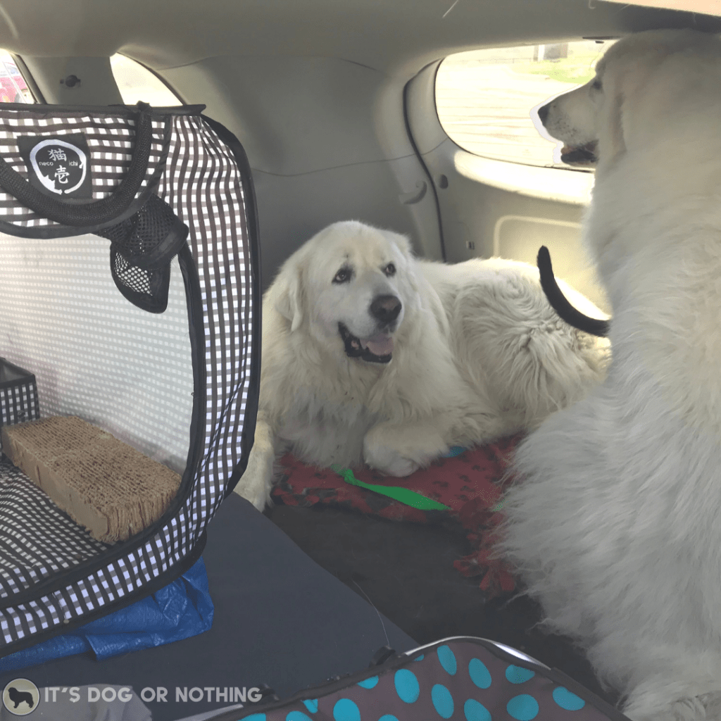 A recap of day three of our move from Washington to Virginia with four Great Pyrenees and a cat!   It's Dog or Nothing