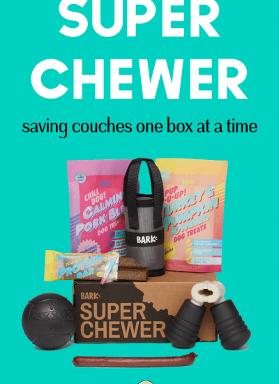 Super Chewer—saving couches one box at a time