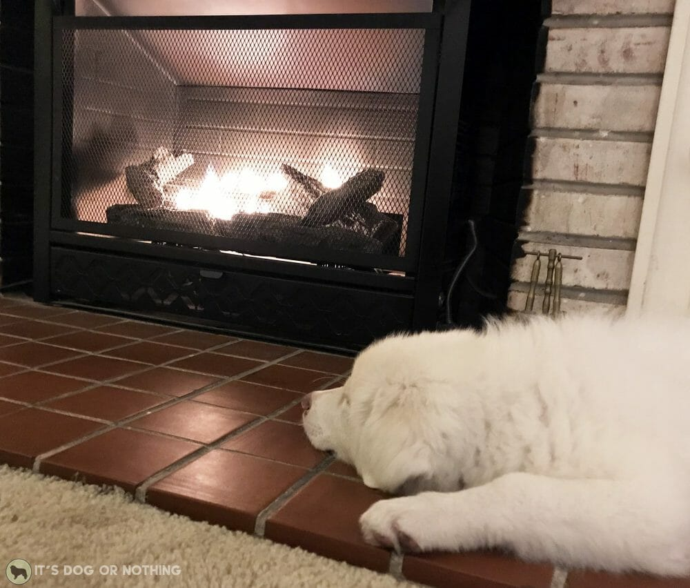 Great Pyrenees puppy in front of the fireplace