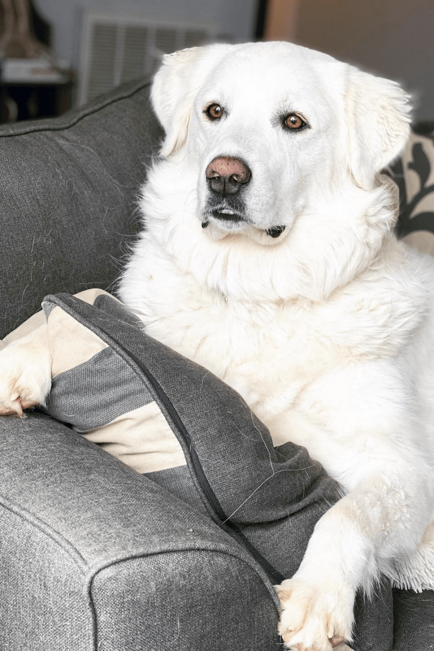 From Scared to Service Dog: Kiska's Unspoken Story